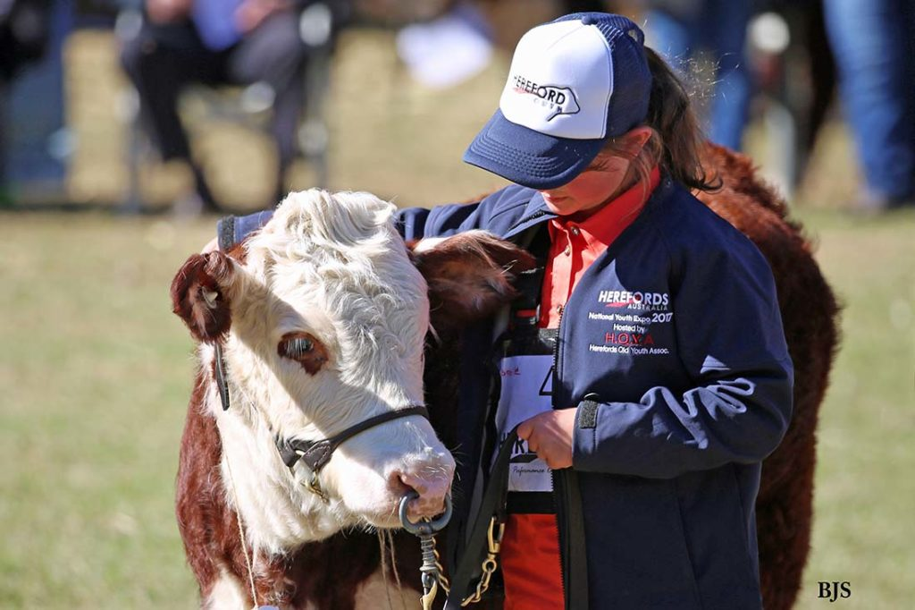 Isabelle at the Herefords Australia National Youth Show at Pittsworth, July 2017
