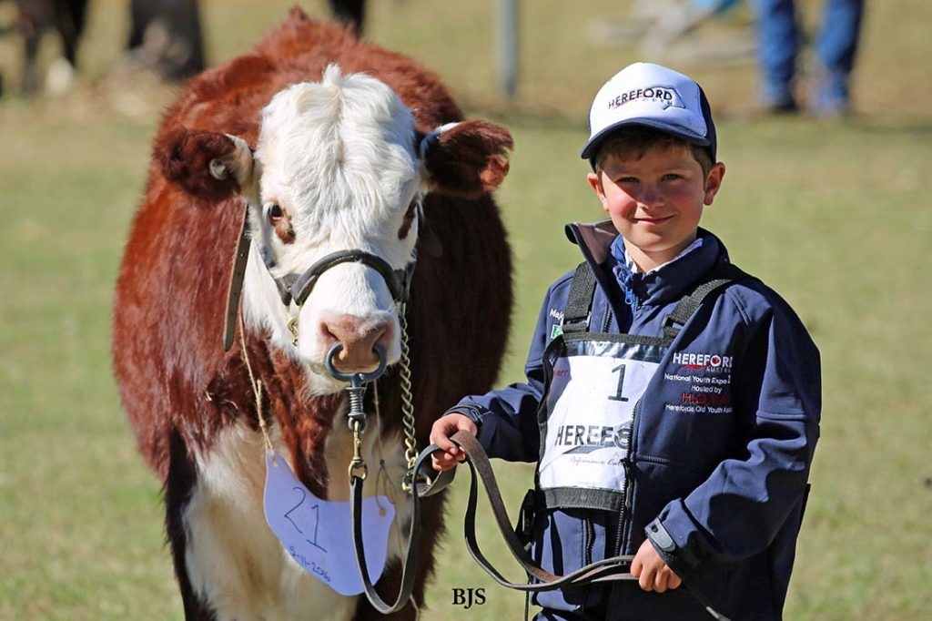 Harry at the Herefords Australia National Youth Show at Pittsworth, July 2017