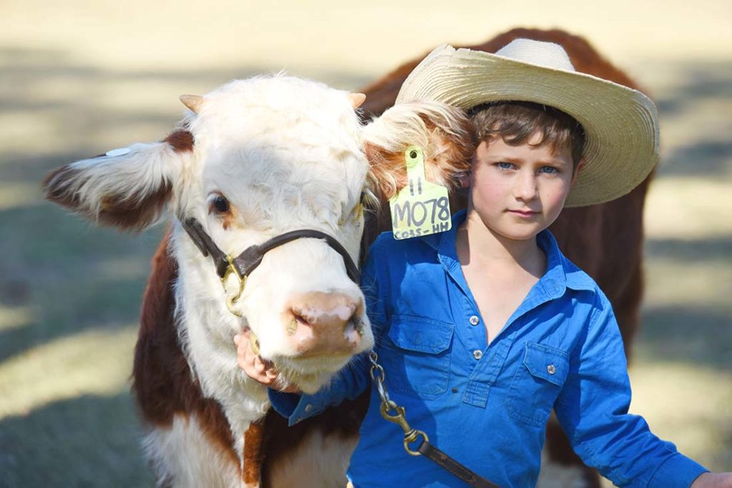 Harry and his heifer Wallan Creek Grace at the Miles Show, May 2017 Image: Coulton's Country