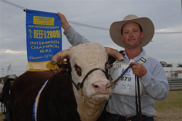 Interbreed Champion - Beef Australia 2009